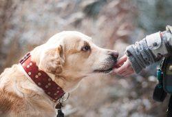 Diabetiker-Warnhunde – die tierischen Retter