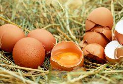 Eier gehören auf die Speisekarte